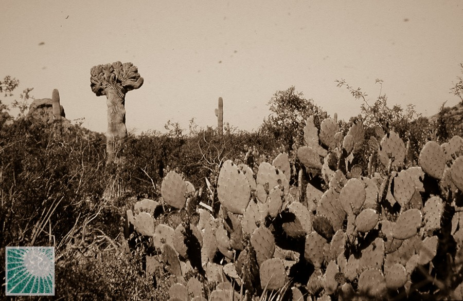 Desert Botanic Garden, Phoenix