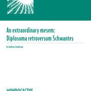 MQ02 - Diplosoma retroversum