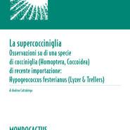 MQ03 - La supercocciniglia