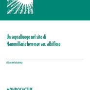 MQ07 - Mammillaria herrerae albiflora