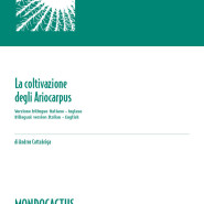 MQ10 - La coltivazione degli Ariocarpus